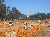 St.Vincent's Pumpkin Field