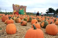 pumpkins at Adobe Pumpkin Farm