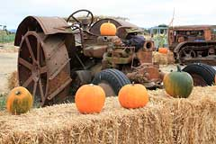 Pumpkins and tractor at Adobe Pumpkin Farm in Petaluma