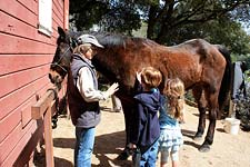 Visiting the Morgan horse ranch at Bear Valley in Point Reyes National Seashore