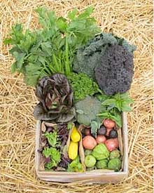 Bloomfield Farms CSA share