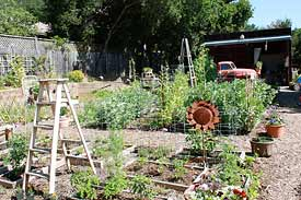 Farm Girl Nursery in Novato