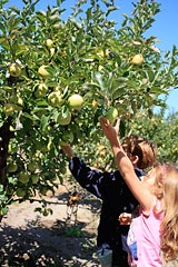 Picking apples at Gabriel Farm in Graton