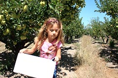Picking apples in Gabriel Farm orchard