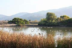 Las Gallinas ponds