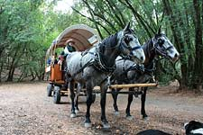 Indian Valley Carriages covered wagon