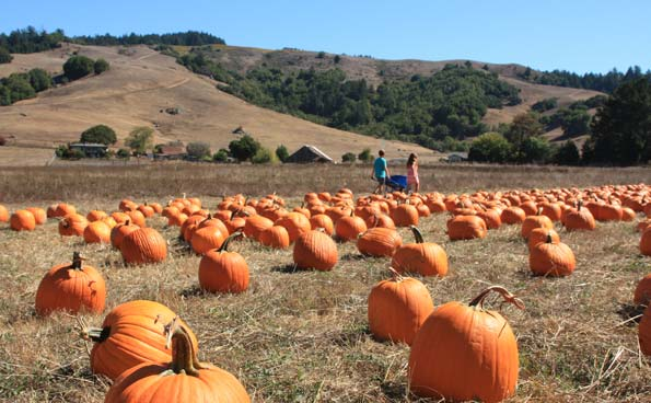 Nicasio Valley Farms Pumpkin Patch