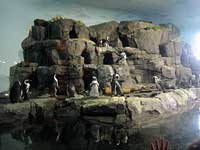 Penguin colony at the Monterey Bay Aquarium Splash Zone