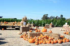 Petaluma Pumpkin Patch
