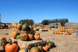 Peter Pumpkin Patch