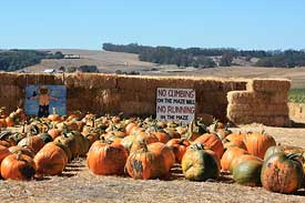 Pumpkins and hay maze at Peter Pumpkin Patch
