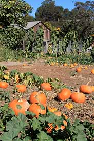 Peterson's Farm pumpkin patch