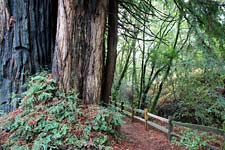 Roy's Redwoods trail