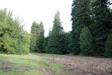 The Great Meadow at Roy's Redwoods