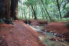 Roy's Redwoods stream and forest floor