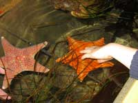 Touching pool and starfish at the Splash Zone