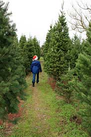 Christmas Tree Farm in Sebastopol