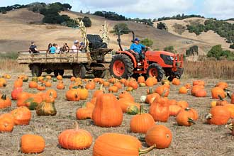 North Bay pumpkin patches