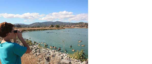 Las Gallinas Wildlife Ponds San Rafael