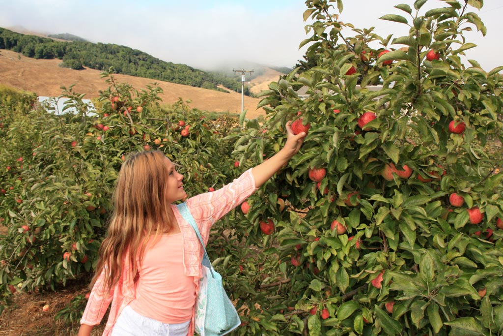 U Pick Apples And More Farm Fun At Chileno Valley Ranch