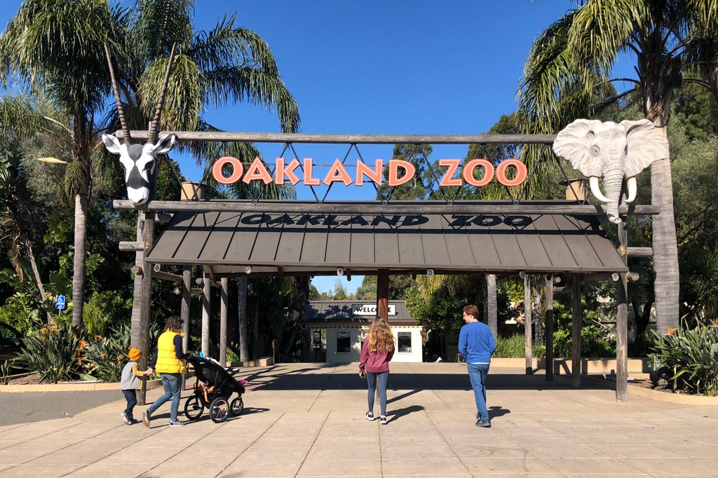 oakland zoos newest addition - 1024×682
