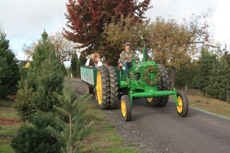 The Best Guide to Marin and Sonoma Christmas Tree Farms ...