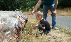 Family Adventure Day at Jack London State Historic Park