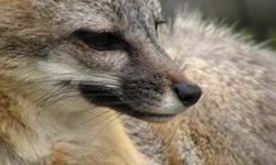 Bay Area Wild with Wildlife Associates