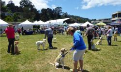 2nd Annual WAG Dog Festival Sausalito