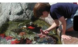 Bodega Marine Labratory