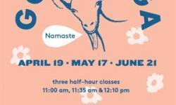 Goat Yoga Marin County Mart