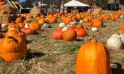Godmother's Pumpkin Patch, San Rafael