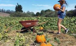 McClelland's Pumpkin Patch