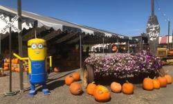 Pronzini Pumpkin Patch