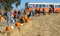 Western Railway Museum Pumpkin Patch Festival