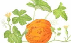 Pumpkin artwork by Bonnie Bonner