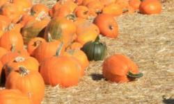 Halloween Harvest Festival, Marinwood Community Center