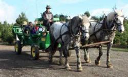 Garlock Tree Farm–Sebastopol