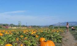 Santa Rosa Pumpkin Patch