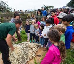 Family Farm Day - Sheep to Shawl, Slide Ranch