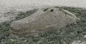 Drake's Beach Annual Sand Sculpture Contest