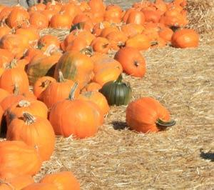 Halloween Harvest Festival, Marinwood Community Center