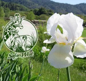 Earth Day at Safari West, Santa Rosa