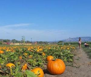 Santa Rosa Pumpkin Patch