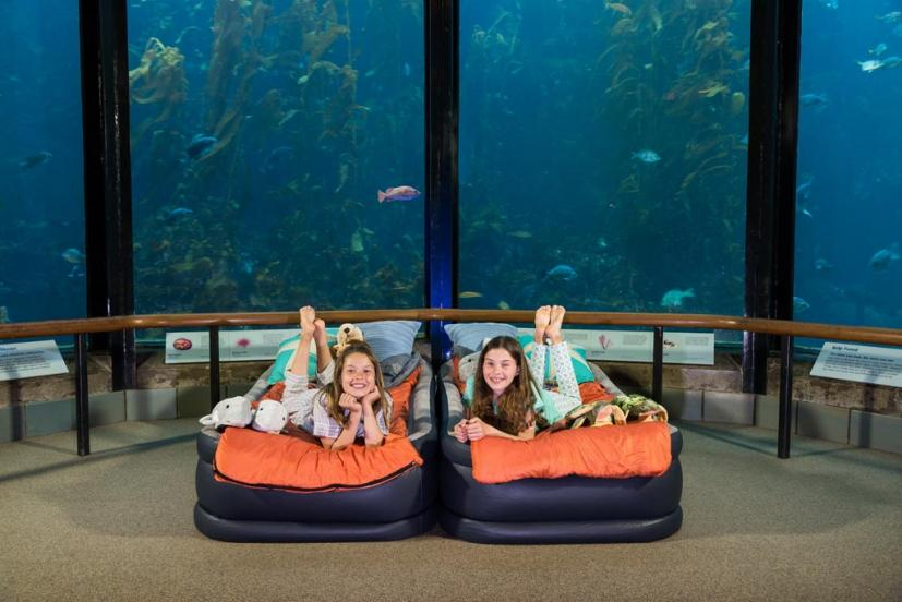 Best Family Sleepovers in the Bay Area and Beyond
