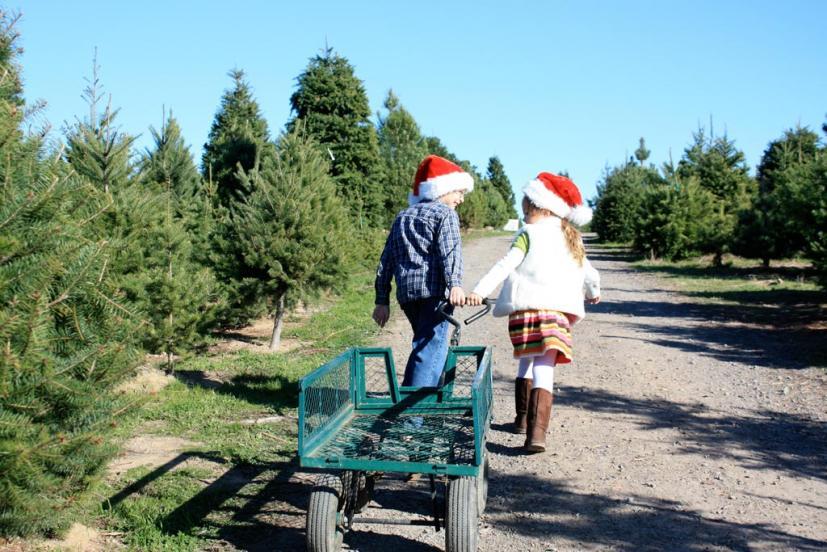 Marin & Sonoma Christmas Tree Farms & Lots