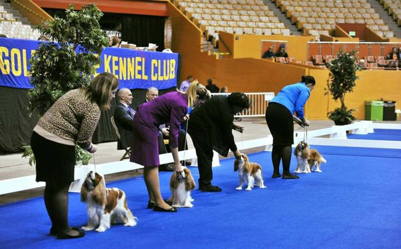 Golden Gate Kennel Club Dog Show Cow Palace January