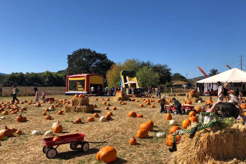 The Godmothers of Timothy Murphy School Pumpkin Field (St  Vincent's