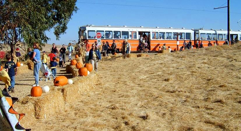Western Railway Museum train and pumpkin patch