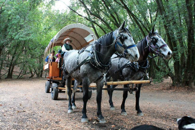Indian Valley Carriage covered wagon Gary Sello